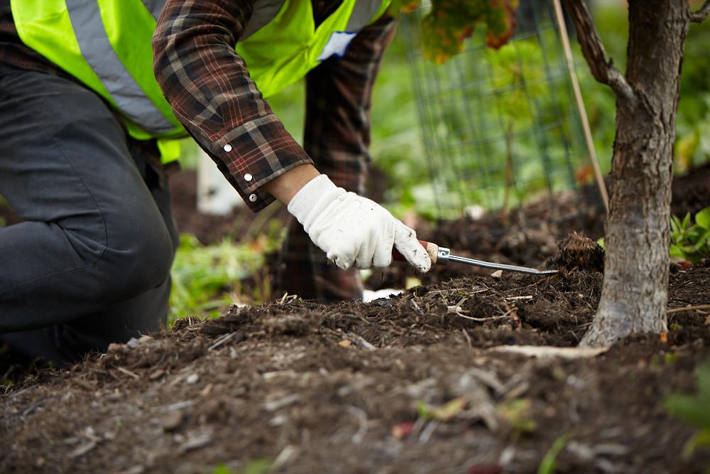 volunteer working on tree care